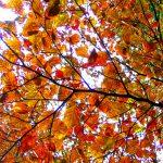 Höstens retreater på Svartbäcken
