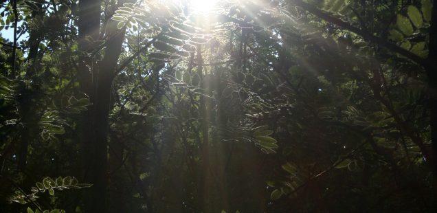 Artiklar om kväkarnas andlighet