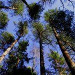 Har naturen rättigheter? Referat från ett föredrag