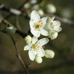 Aprilprogrammet för Kväkargården