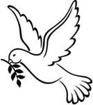 duva fredskommittén