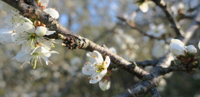 Aprilprogram för Kväkargården