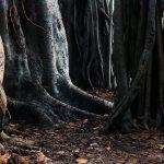 Animerad film om rötter och flykt